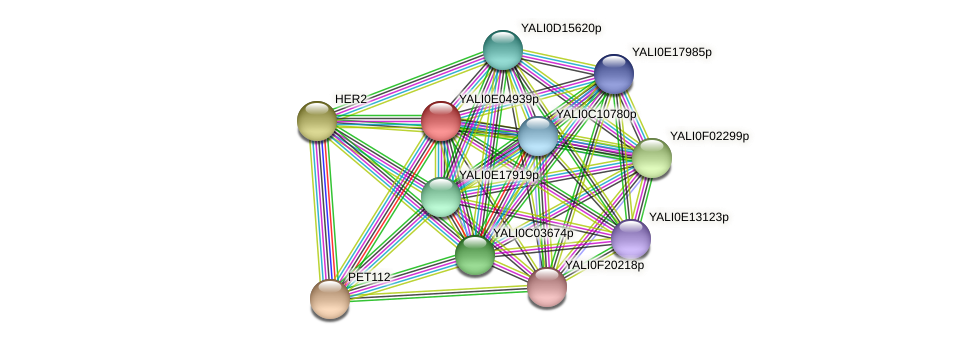XP_503562.1 protein (Yarrowia lipolytica) - STRING interaction network