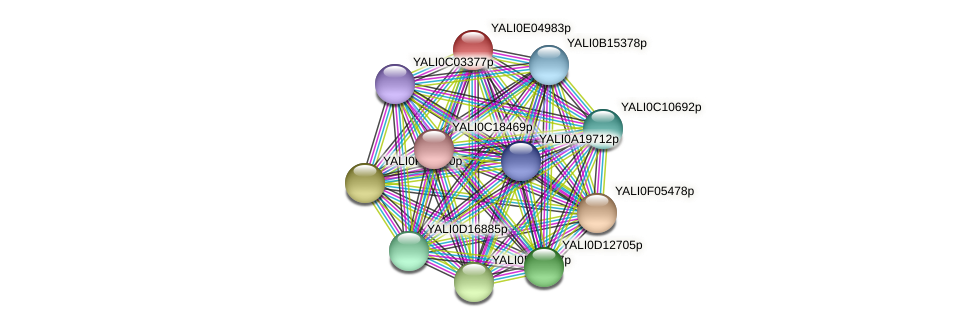 XP_503564.1 protein (Yarrowia lipolytica) - STRING interaction network