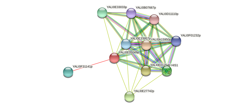 XP_503567.1 protein (Yarrowia lipolytica) - STRING interaction network