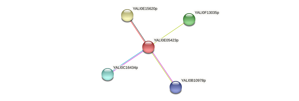 XP_503584.1 protein (Yarrowia lipolytica) - STRING interaction network
