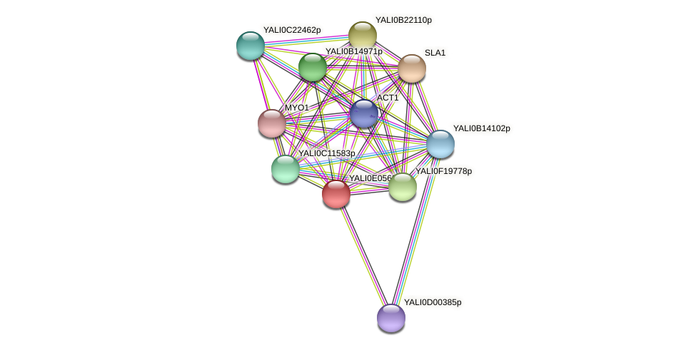 XP_503593.1 protein (Yarrowia lipolytica) - STRING interaction network