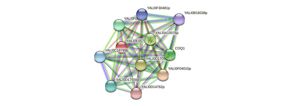 XP_503599.1 protein (Yarrowia lipolytica) - STRING interaction network