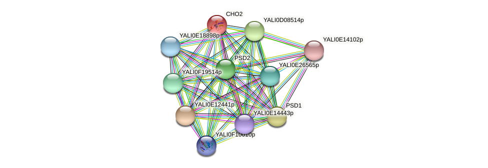 CHO2 protein (Yarrowia lipolytica) - STRING interaction network
