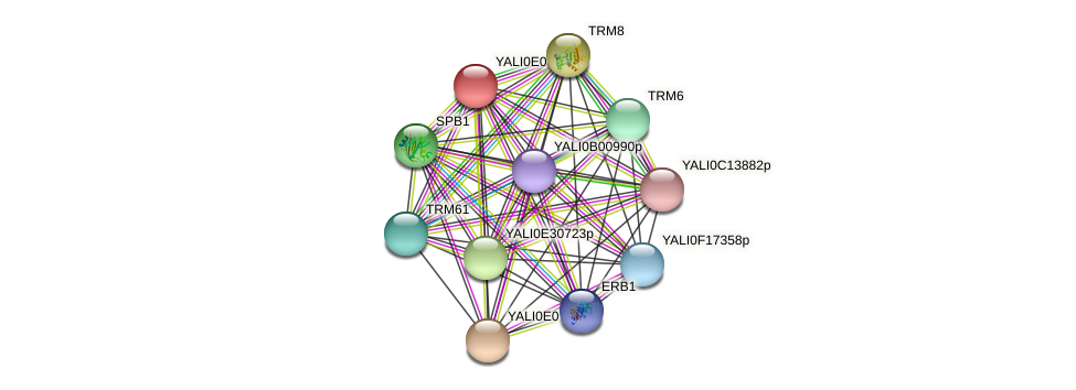 XP_503641.1 protein (Yarrowia lipolytica) - STRING interaction network