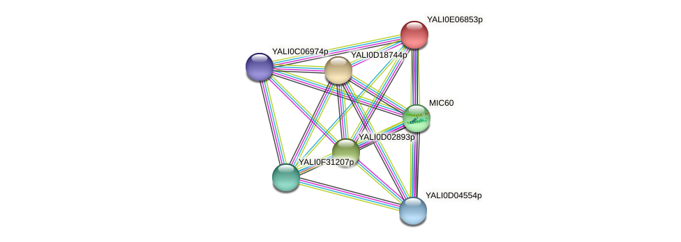 XP_503645.1 protein (Yarrowia lipolytica) - STRING interaction network