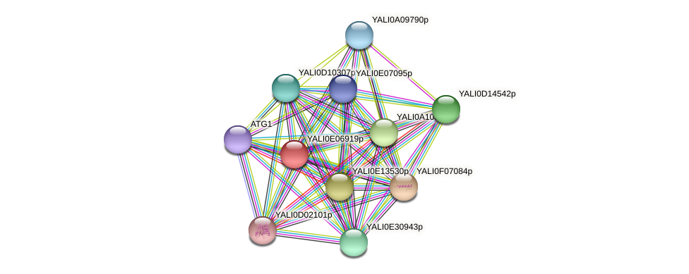 XP_503648.1 protein (Yarrowia lipolytica) - STRING interaction network