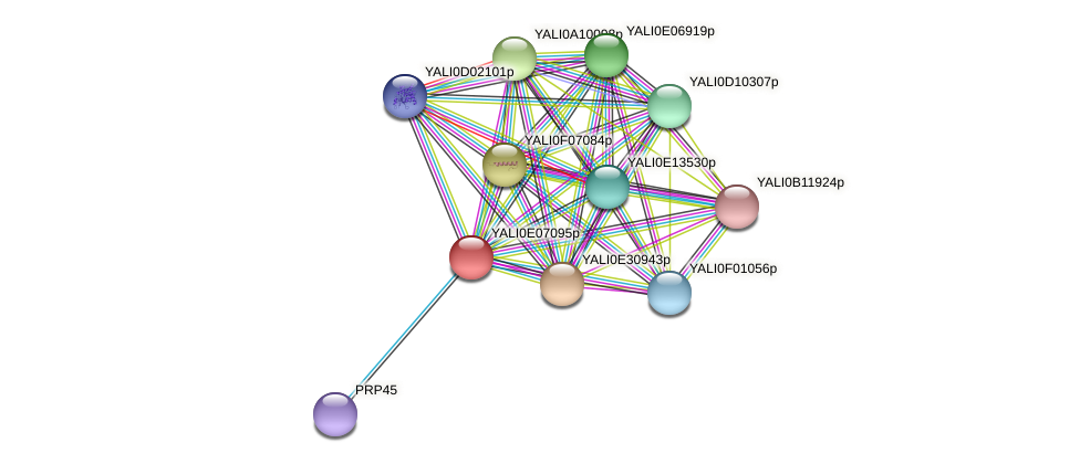 XP_503652.1 protein (Yarrowia lipolytica) - STRING interaction network