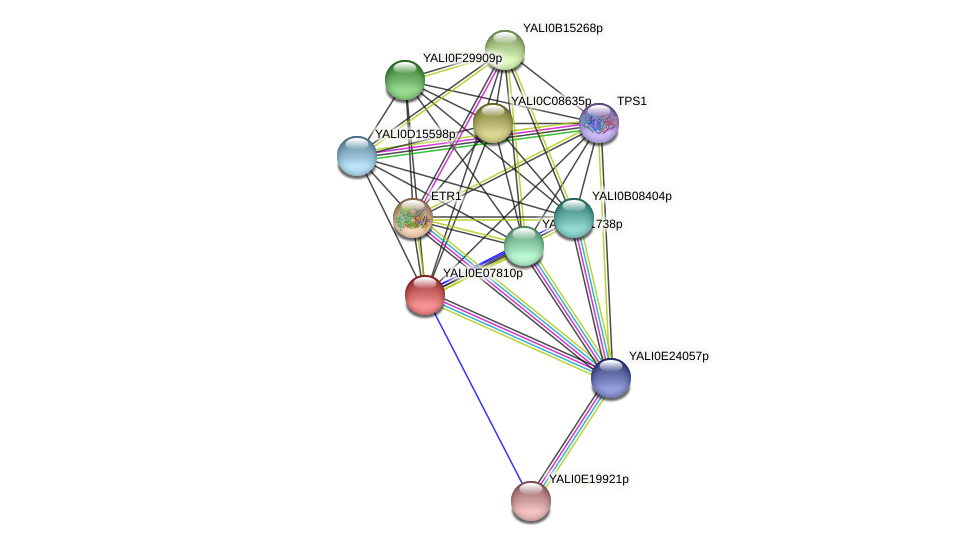 XP_503674.1 protein (Yarrowia lipolytica) - STRING interaction network