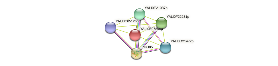 XP_503676.1 protein (Yarrowia lipolytica) - STRING interaction network