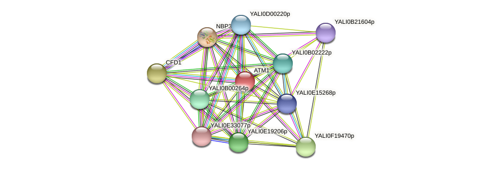 ATM1 protein (Yarrowia lipolytica) - STRING interaction network
