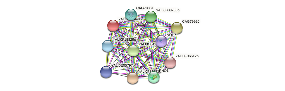 XP_503695.1 protein (Yarrowia lipolytica) - STRING interaction network