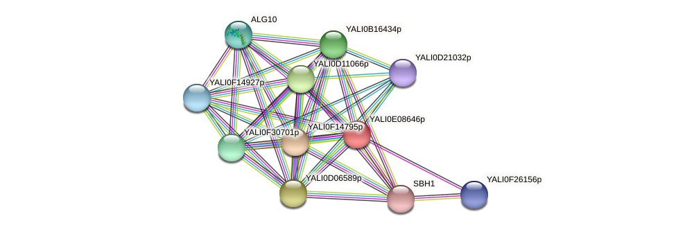 XP_503704.1 protein (Yarrowia lipolytica) - STRING interaction network