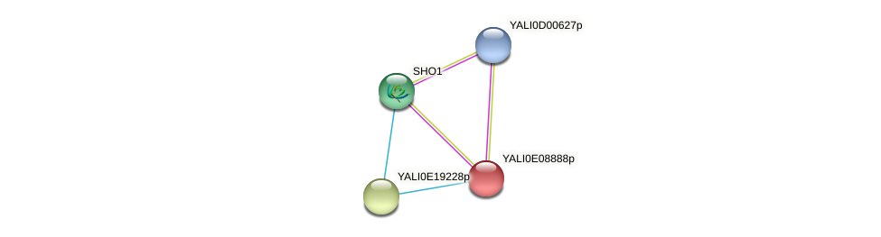 XP_503709.2 protein (Yarrowia lipolytica) - STRING interaction network