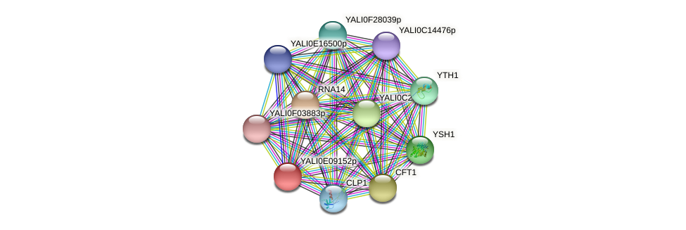 XP_503722.1 protein (Yarrowia lipolytica) - STRING interaction network