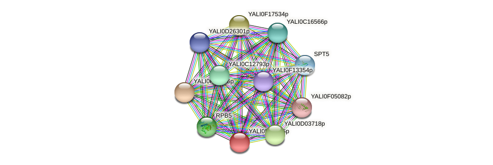 XP_503724.1 protein (Yarrowia lipolytica) - STRING interaction network