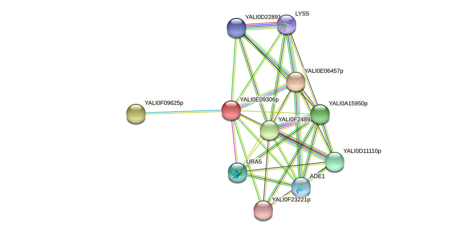 XP_503730.1 protein (Yarrowia lipolytica) - STRING interaction network