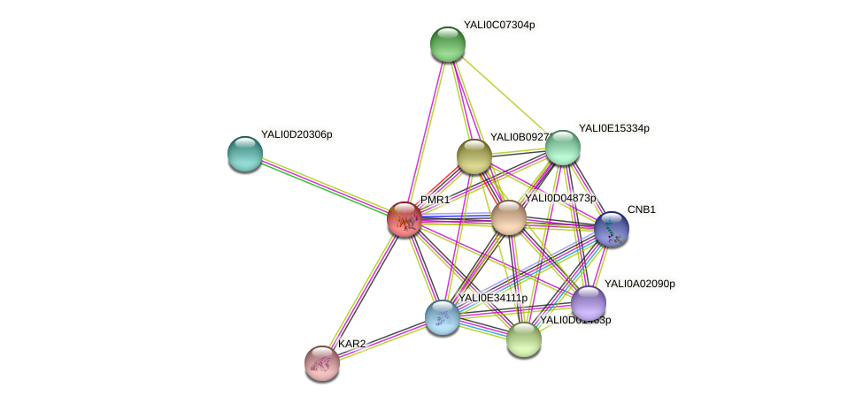 PMR1 protein (Yarrowia lipolytica) - STRING interaction network