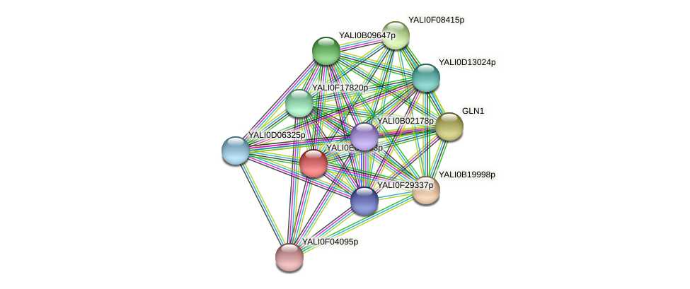 XP_503741.1 protein (Yarrowia lipolytica) - STRING interaction network