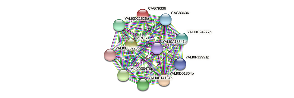 XP_503745.1 protein (Yarrowia lipolytica) - STRING interaction network