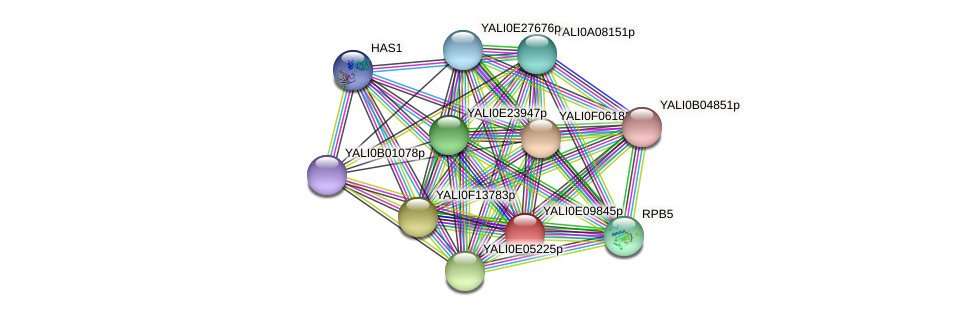 XP_503752.1 protein (Yarrowia lipolytica) - STRING interaction network