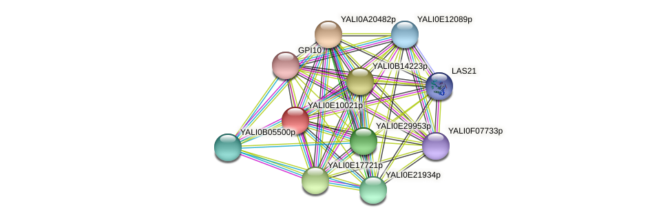 XP_503760.1 protein (Yarrowia lipolytica) - STRING interaction network
