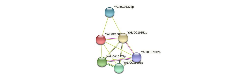 XP_503763.1 protein (Yarrowia lipolytica) - STRING interaction network