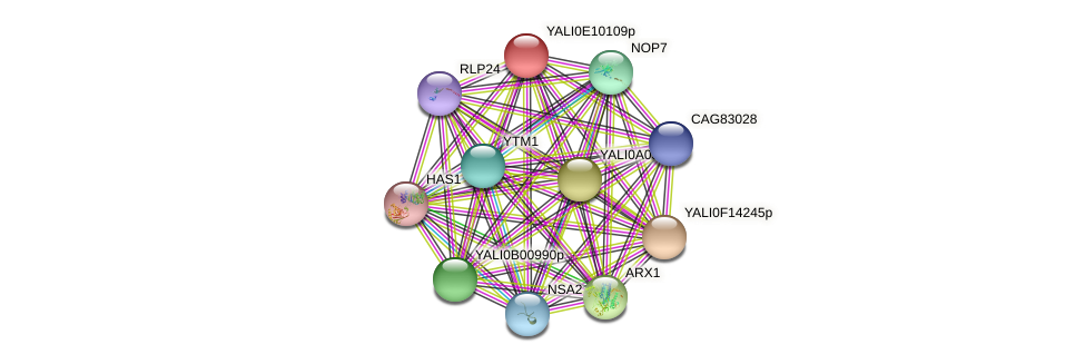 XP_503764.1 protein (Yarrowia lipolytica) - STRING interaction network