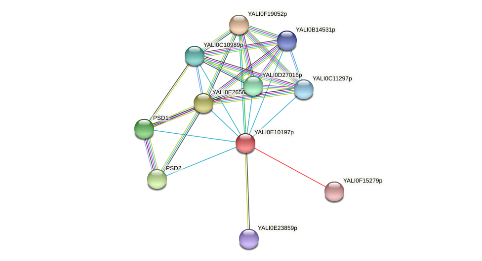 XP_503769.1 protein (Yarrowia lipolytica) - STRING interaction network