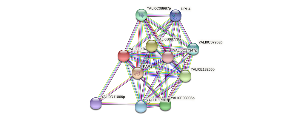 XP_503772.1 protein (Yarrowia lipolytica) - STRING interaction network