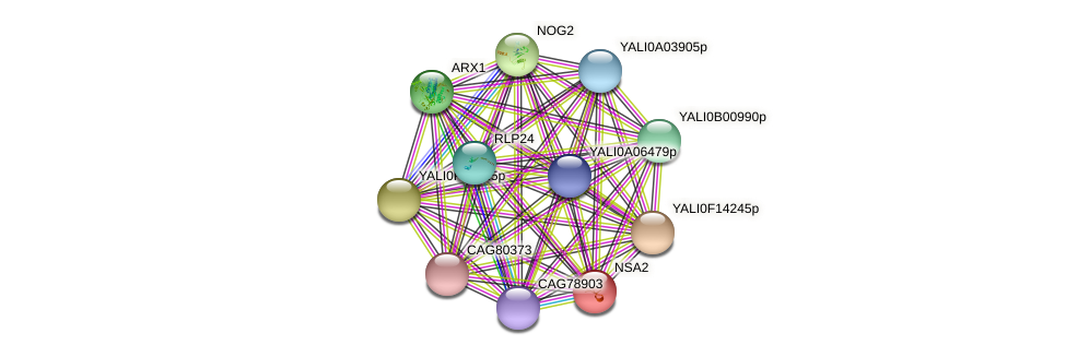 NSA2 protein (Yarrowia lipolytica) - STRING interaction network