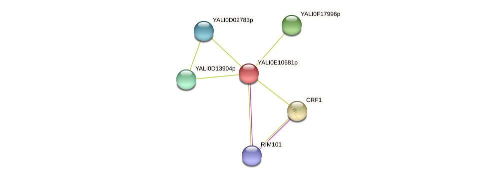 XP_503791.1 protein (Yarrowia lipolytica) - STRING interaction network