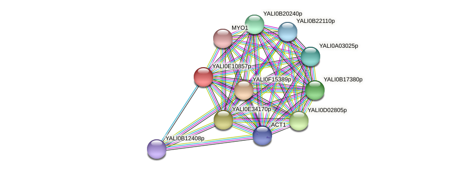 XP_503798.1 protein (Yarrowia lipolytica) - STRING interaction network