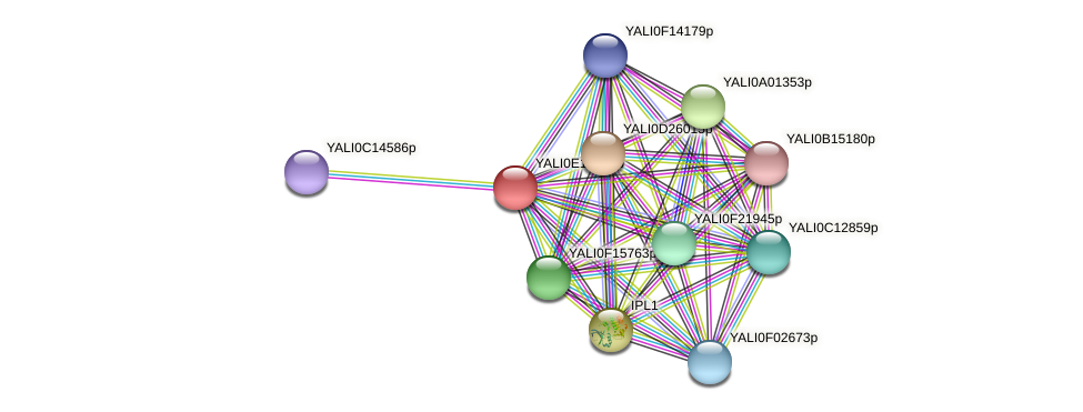 XP_503799.1 protein (Yarrowia lipolytica) - STRING interaction network