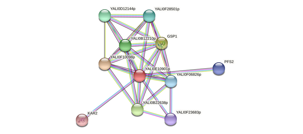 XP_503800.1 protein (Yarrowia lipolytica) - STRING interaction network