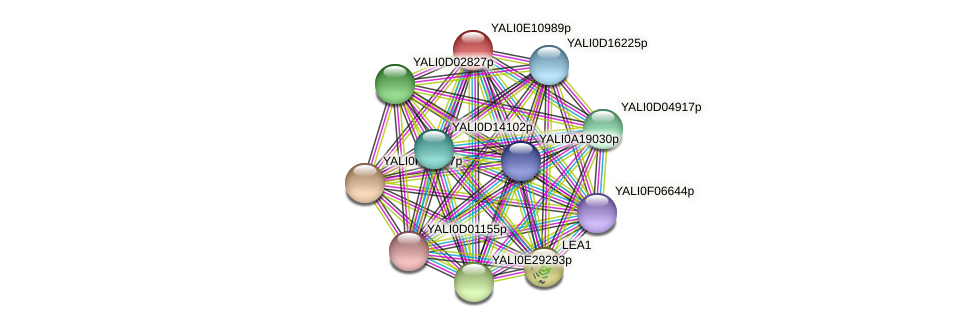XP_503802.1 protein (Yarrowia lipolytica) - STRING interaction network