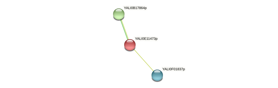 XP_503821.1 protein (Yarrowia lipolytica) - STRING interaction network