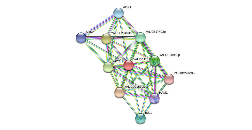 XP_503822.1 protein (Yarrowia lipolytica) - STRING interaction network