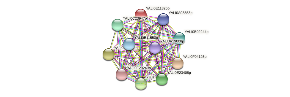 XP_503835.1 protein (Yarrowia lipolytica) - STRING interaction network