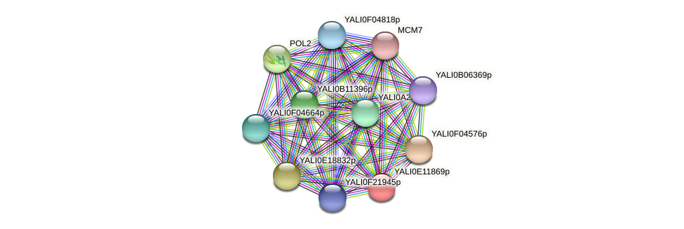 XP_503837.1 protein (Yarrowia lipolytica) - STRING interaction network