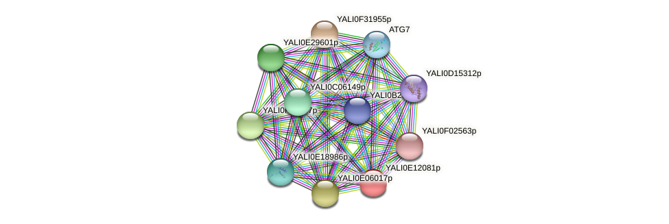XP_503847.2 protein (Yarrowia lipolytica) - STRING interaction network