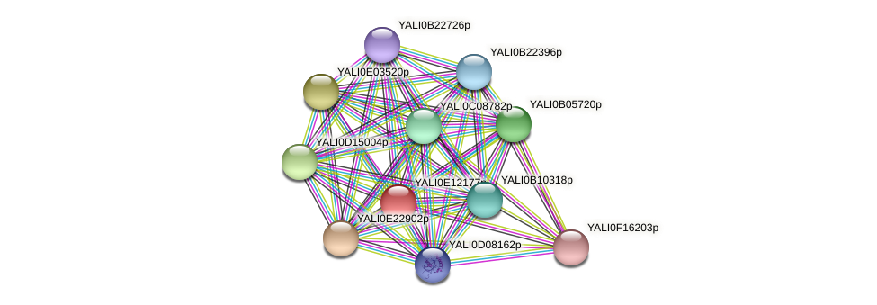 XP_503852.1 protein (Yarrowia lipolytica) - STRING interaction network