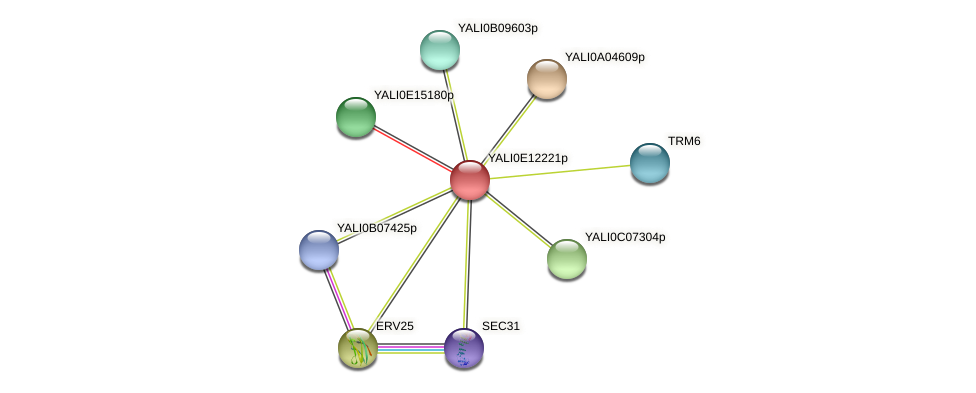 XP_503854.1 protein (Yarrowia lipolytica) - STRING interaction network