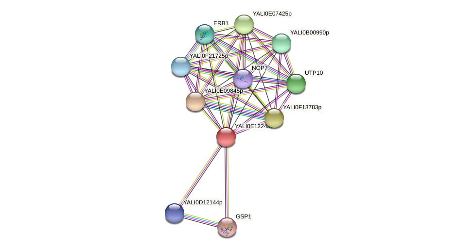 XP_503855.1 protein (Yarrowia lipolytica) - STRING interaction network