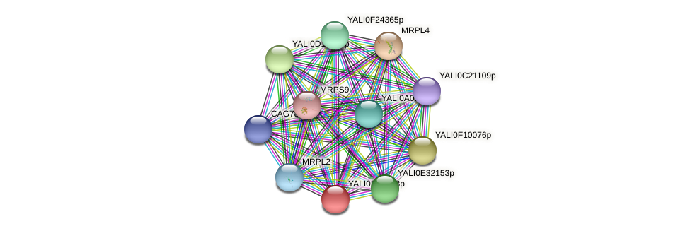 XP_503859.1 protein (Yarrowia lipolytica) - STRING interaction network