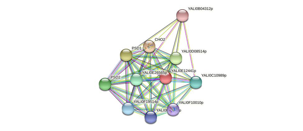 XP_503863.2 protein (Yarrowia lipolytica) - STRING interaction network