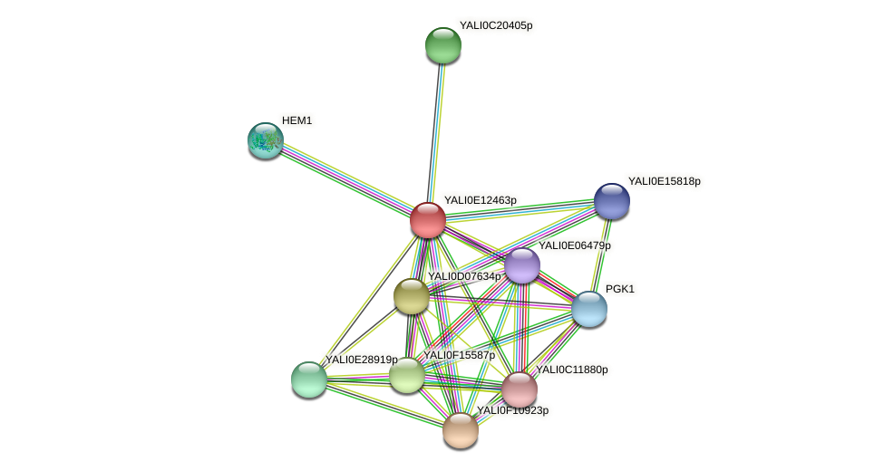 XP_503864.1 protein (Yarrowia lipolytica) - STRING interaction network