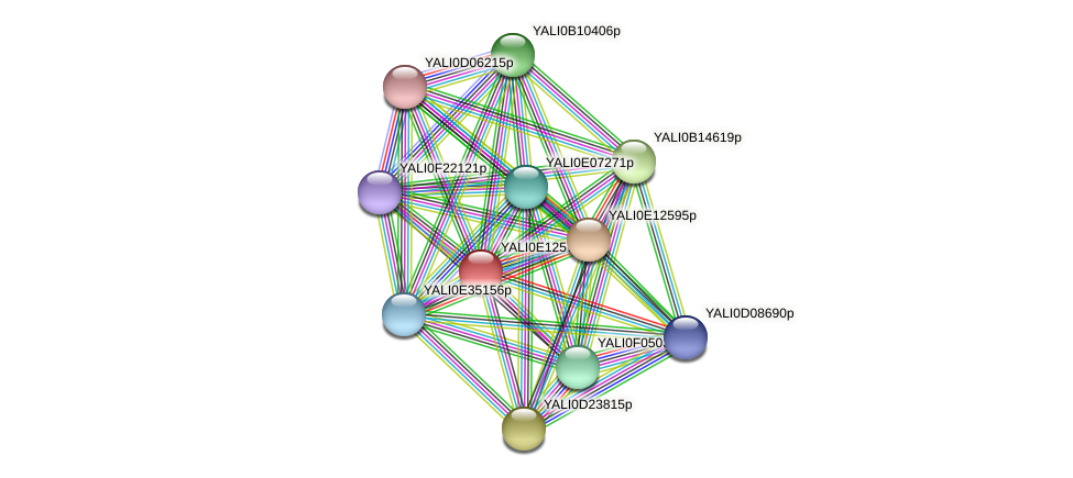XP_503869.1 protein (Yarrowia lipolytica) - STRING interaction network