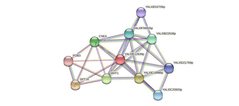 XP_503872.1 protein (Yarrowia lipolytica) - STRING interaction network