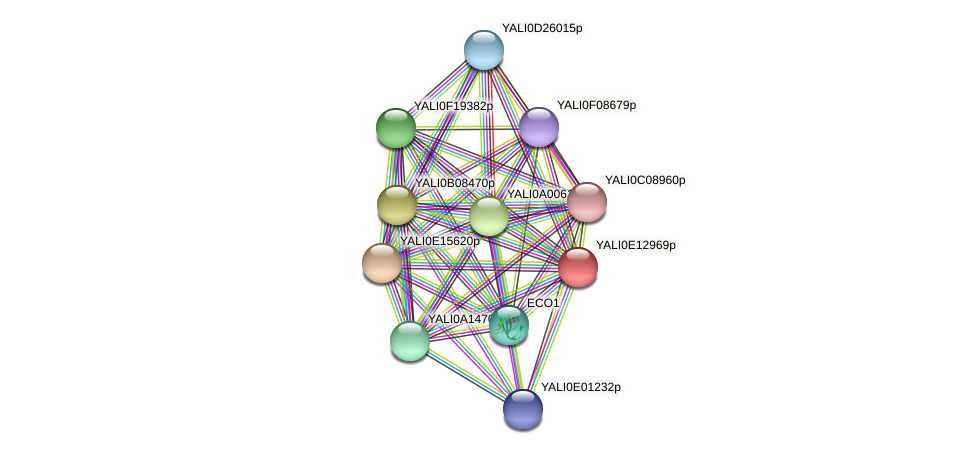 XP_503881.2 protein (Yarrowia lipolytica) - STRING interaction network