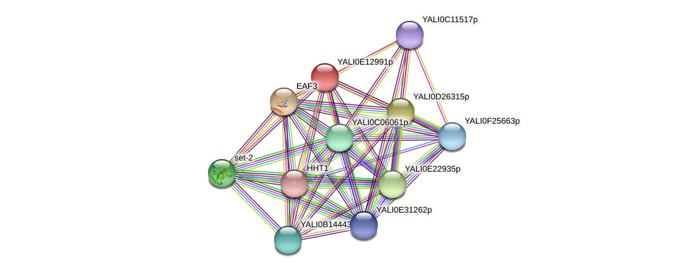 XP_503882.2 protein (Yarrowia lipolytica) - STRING interaction network